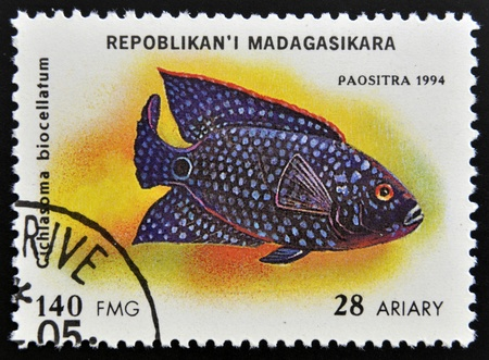 cichlasoma: MADAGASCAR - CIRCA 1994: stamp printed in Madagascar dedicated to fish shows cichlasoma biocellatum, circa 1994