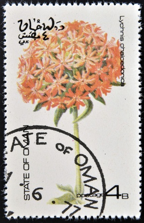 OMAN - CIRCA 1977  stamp printed in Oman dedicated to flowers shows lychnis chalcedonica, circa 1977