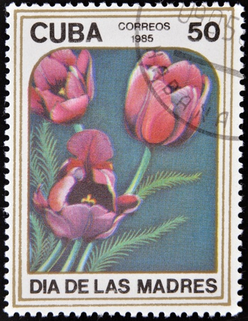 phytology: CUBA - CIRCA 1985: A stamp printed in Cuba dedicated to mother´s day shows image of a Tupils,  circa 1985  Stock Photo
