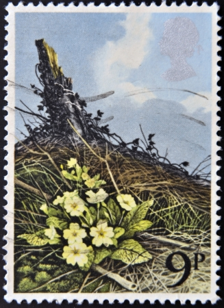UNITED KINGDOM - CIRCA 1979  A stamp printed in Great Britain dedicates to British Flowers, shows Primrose, circa 1979