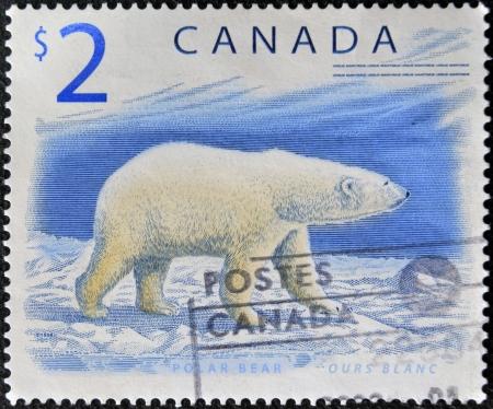 CANADA - CIRCA 1998: A stamp printed in Canada shows a Polar Bear, Ours blanc, circa 1998 Stock Photo - 16136720