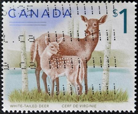 CANADA - CIRCA 2005: Un timbre imprimé au Canada montre deux cerfs de Virginie, cerf de Virginie, vers 2005 Banque d'images
