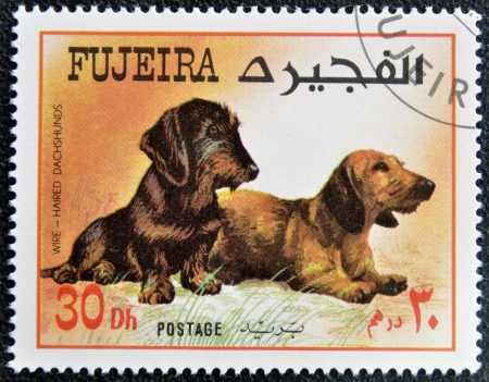 fujeira: FUJEIRA - CIRCA 1980: A stamp printed in Fujeira dedicated to dogs, shows wire haired and dachshunds, circa 1980 Stock Photo