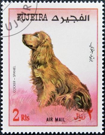fujeira: FUJEIRA - CIRCA 1980: A stamp printed in Fujeira dedicated to dogs, shows cocker spaniel, circa 1980