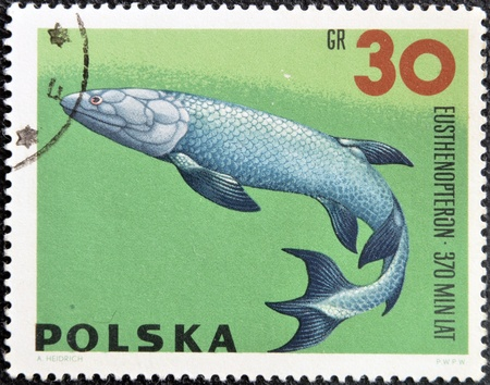 vertebrates: POLAND - CIRCA 1966  A stamp printed in Poland shows Eusthenopteron from the series  Dinosaurs, Prehistoric Vertebrates, circa 1966
