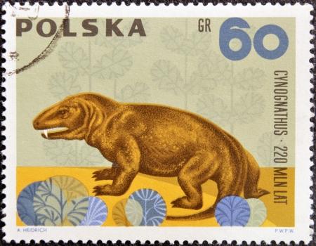 circa: POLAND - CIRCA 1966: A stamp printed in Poland shows Cynognathus from the series  Dinosaurs, Prehistoric Vertebrates, circa 1966  Stock Photo
