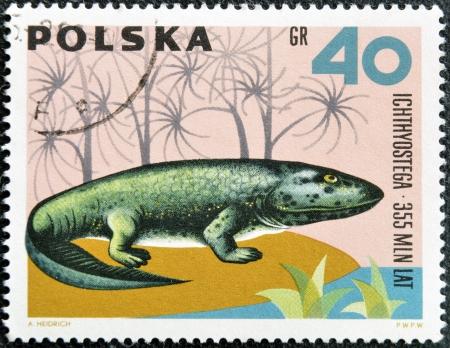 폴란드 - 경 1966 : 폴란드에서 인쇄하는 스탬프는 1966 년경 시리즈 공룡, 선사 시대의 척추 동물에서 Ichthyostega를 보여줍니다 스톡 콘텐츠