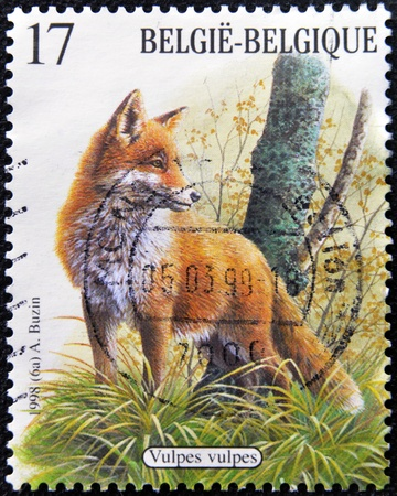 BELGIUM - CIRCA 1998: A stamp printed in Belgium shows fox (Vulpes vulpes), circa 1998 photo