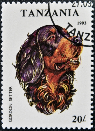 TANZANIA - CIRCA 1993: A stamp printed in Tanzania shows Gordon Setter, circa 1993  photo
