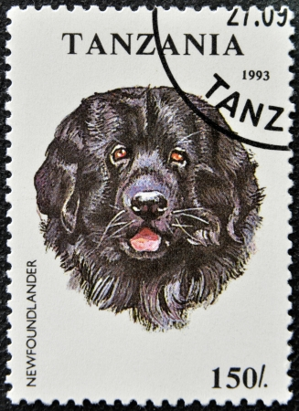 TANZANIA - CIRCA 1993: A stamp printed in Tanzania shows Newfoundlander, circa 1993  photo