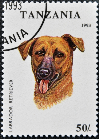 TANZANIA - CIRCA 1993: A stamp printed in Tanzania shows Labrador Retriever, circa 1993  photo