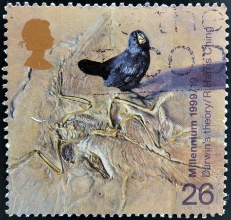 origen animal: Reino Unido - CIRCA 1999: Un sello impreso en Gran Bretaña muestra Galápagos Finch y Fossilzed Skeleton (teoría de Darwin de la evolución), circa 1999