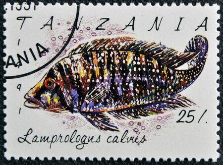 collectible: TANZANIA - CIRCA 1991: A stamp printed in Tanzania shows Lamprologus calvus, circa 1991