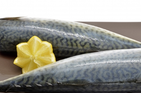 Two mackerel fish fillets  photo