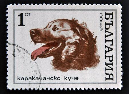 philatelic: BULGARIA - CIRCA 1970: A stamp printed in Bulgaria shows face a dog, circa 1970