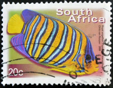 royal angelfish: SOUTH AFRICA - CIRCA 2000: A stamp printed in RSA shows royal angelfish, Pygoplites Diacanthus, circa 2000