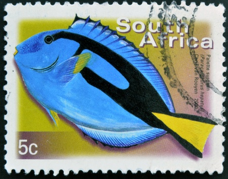 SOUTH AFRICA - CIRCA 2000: A stamp printed in RSA shows palette surgeon, Paracanthurus hepatus, circa 2000  Stock Photo - 16959046