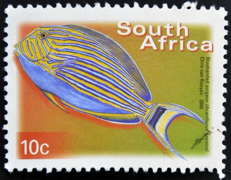 rsa: SOUTH AFRICA - CIRCA 2000: A stamp printed in RSA shows bluebanded surgeon, Acanthurus lineatus, circa 2000  Stock Photo