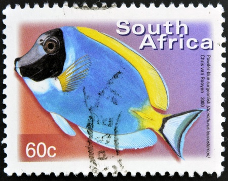 acanthurus leucosternon: SOUTH AFRICA - CIRCA 2000: A stamp printed in RSA shows powder blue surgeonfish, Acanthurus leucosternon, circa 2000  Stock Photo