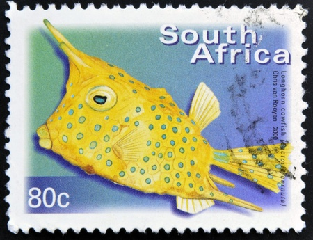 SOUTH AFRICA - CIRCA 2000: A stamp printed in RSA shows longhorn cowfish, Lactoria cornuta, circa 2000  Stock Photo - 16959246
