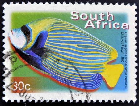 pomacanthus imperator: SOUTH AFRICA - CIRCA 2000: A stamp printed in RSA shows emperor angelfish, Pomacanthus imperator, circa 2000
