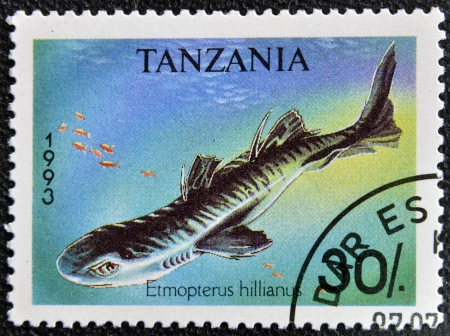 TANZANIA - CIRCA 1993: A stamp printed in Tanzania shows Caribbean lanternshark, Etmopterus hillianus, circa 1993 Stock Photo - 16959508