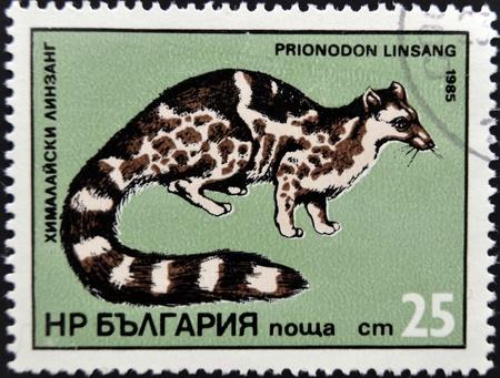 BULGARIA - CIRCA 1985: stamp printed in Bulgaria shows Prionodon linsang, circa 1985. Stock Photo - 17140223