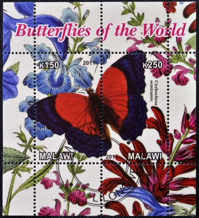 MALAWI - CIRCA 2011: Stamp printed in Malawi dedicated to butterflies of the world, shows cirrbocbroa semiramis, circa 2011 photo