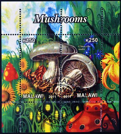 philatelic: MALAWI - CIRCA 2011: Stamps printed in Malawi dedicated to mushrooms, shows clitocybe nuda, circa 2011
