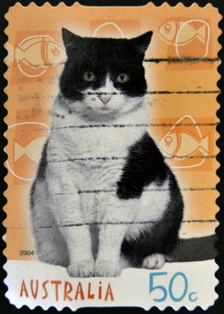 AUSTRALIA - CIRCA 2004: A stamp printed in australia shows a cat, circa 2004 photo