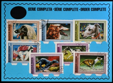 HUNGARY - CIRCA 1972: Stamps printed in Hungary shows dogs, order complete, circa 1972 photo