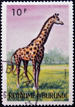 burundi: BURUNDI - CIRCA 1964: stamp printed in Kingdom of Burundi shows an African animal - Giraffe, circa 1964