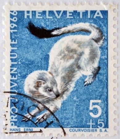 ermine: SUIZA - CIRCA 1966: un sello impreso en Suiza muestra armi�o, Erminea Mustela, Comadreja de cola corta, alrededor del a�o 1966 Foto de archivo
