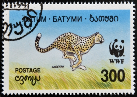 BATUMI - CIRCA 1994: A stamp printed in Batumi shows cheetah, circa 1994