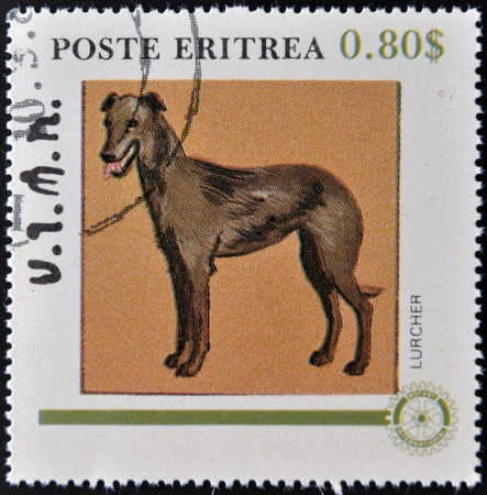 lurcher: ERITREA - CIRCA 1984: A stamp printed in Eritrea shows a dog, lurcher, circa 1984
