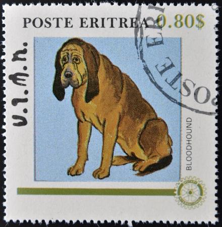 bloodhound: ERITREA - CIRCA 1984: A stamp printed in Eritrea shows a dog, bloodhound, circa 1984