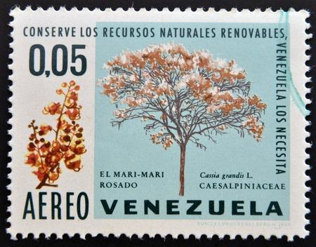 VENEZUELA - CIRCA 1969: A stamp printed in Venezuela shows El Mari-Mari Rosado, Cassia Grandis L. Caesalpiniaceae, circa 1969