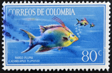 COLOMBIA - CIRCA 1970  Stamp printed in Colombia shows Pargo Pluma, lachnolaimus plumatus, circa 1970 photo