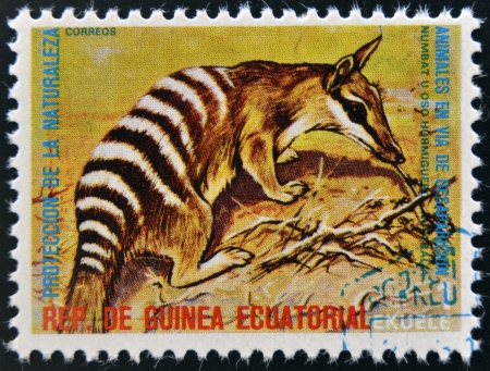 EQUATORIAL GUINEA - CIRCA 1974: Stamp printed in Guinea dedicated to endangered animals, shows numbat, Australia,  circa 1974 photo