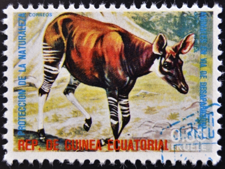 elusive: EQUATORIAL GUINEA - CIRCA 1974: Stamp printed in Guinea dedicated to endangered animals, shows Okapi, Africa,  circa 1974