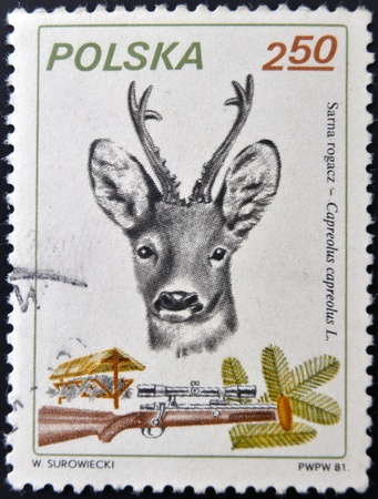 capreolus: POLAND - CIRCA 1981: A stamp printed in Poland shows a deer and rifle, circa 1981.