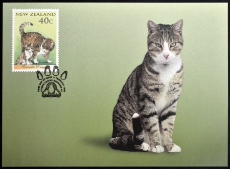 moggy: NEW ZEALAND - CIRCA 1998: stamp printed in New Zealand shows Domestic Cat, domestic moggy, circa 1998