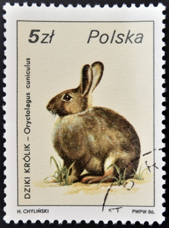 POLAND - CIRCA 1986: A stamp printed in Poland showing rabbit, circa 1986  photo