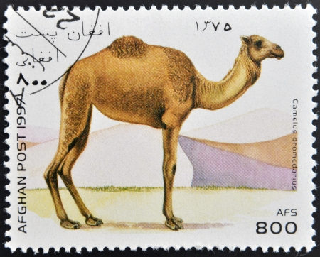 camel post: AFGHANISTAN - CIRCA 1997: A stamp printed in Afghanistan shows camel, camelus dromedarius, circa 1997