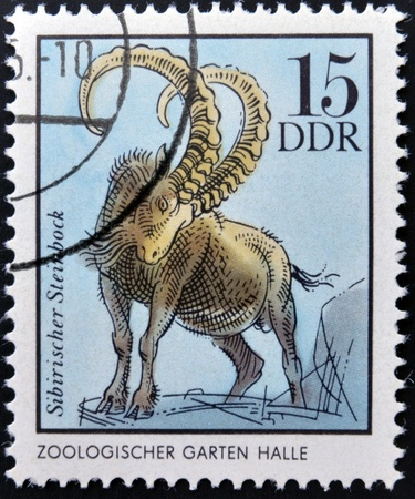 he goat: GERMANY - CIRCA 1975  A Stamp printed in GDR shows  Siberian Chamois, Halle, German Zoological Gardens, circa 1975
