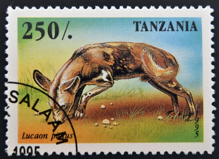 lycaon pictus: A stamp printed in Tanzania shows Lycaon pictus, circa 1995  Stock Photo