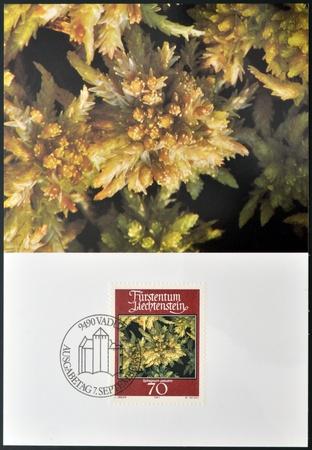 palustre: LIECHTENSTEIN - CIRCA 1981: A stamp printed in Liechtenstein dedicated to mosses and lichens shows sphagnum palustre, circa 1981