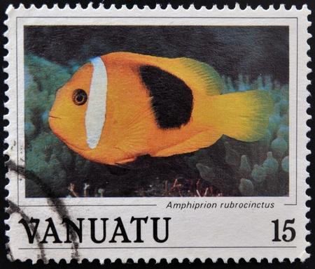 ocellaris clownfish: VANUATU - CIRCA 1990: Stamp printed in anuatu shows a Red anemonefish (Amphiprion rubrocinctus), circa 1990  Editorial