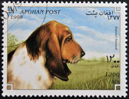 afghan hound: AFGHANISTAN - CIRCA 1998: A stamp printed in Afghanistan  shows Dog, basset hound, circa 1998  Stock Photo