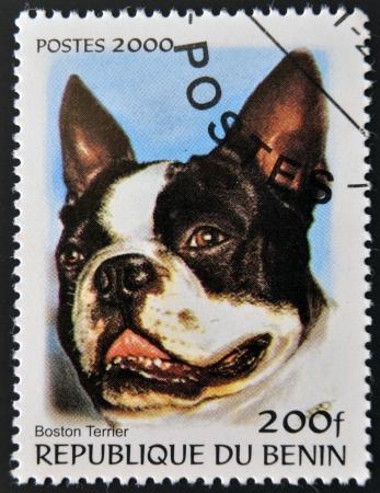 carlin: BENIN - CIRCA 2000: A stamp printed in Benin shows a dog, Boston Terrier, circa 2000